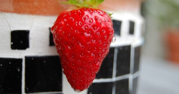 The first strawberry of the season | eatnakednow.com