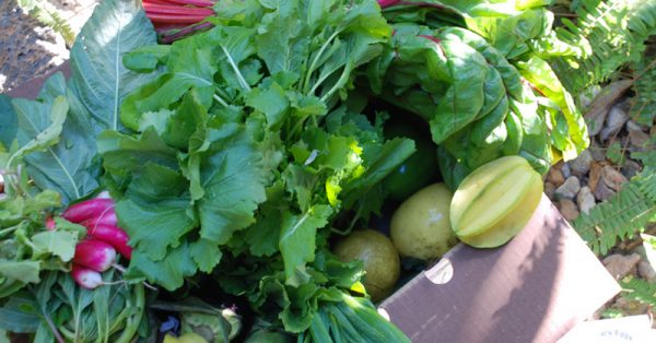 Eat fresh, eat local. How to choose a great CSA | eatnakednow.com