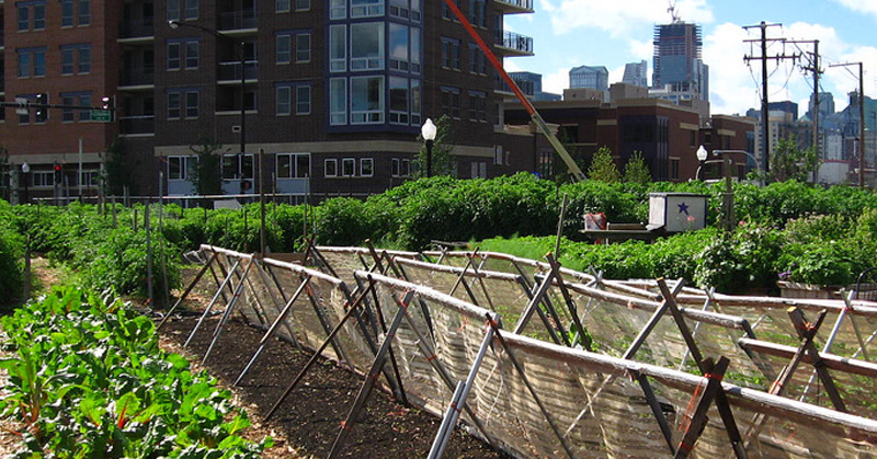 Urban Farming: Reclaiming our land and taking control over our own food chain